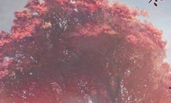 遇见逆水寒情缘树有什么开启方法吗_情缘树开启攻略